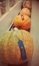 Not the best angle to showcase the biggest pumpkin winner!